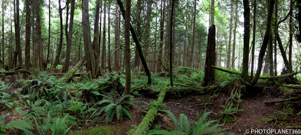 p0005-foret-pano