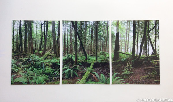 p0005-foret-photos-alignees
