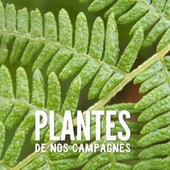 Nouvelle galerie : Plantes de nos campagnes