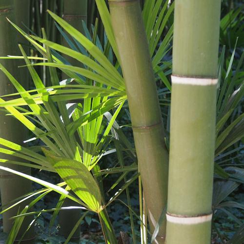 P0061-bambou-macro
