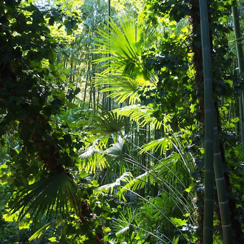 P0061-bambous3