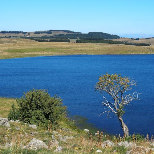 P0063-arbre-lac